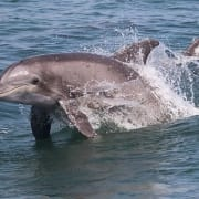 Virginia Beach Oceanfront Hotel | Boat Tours Dolphin Tour