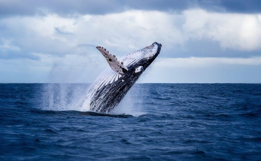 Whale Watching in Virginia Beach
